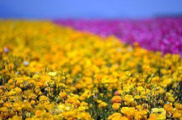 20 потрясающих фото весенних цветов со всего мира