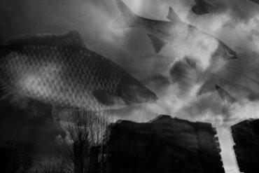 Уникальная экспозиция на ВДНХ объединит выставки двух известных российских фотографов