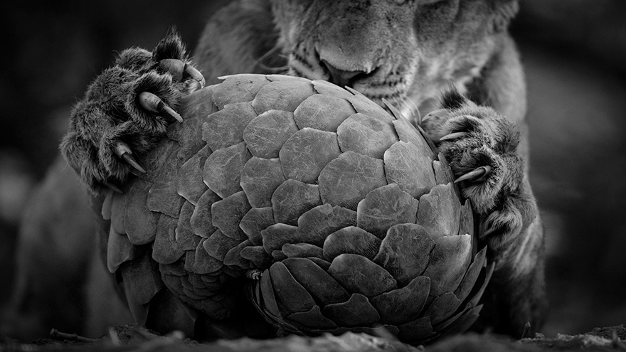 wildlife-photographer-of-the-year-2016-national-history-museum-11-57c824d1ca5bf__880