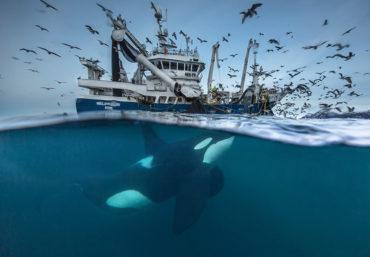 Финалисты конкурса Wildlife Photographer Of The Year 2016