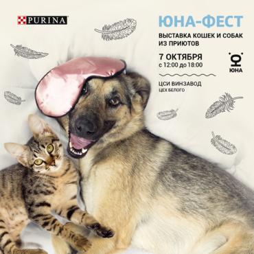 7 октября в ЦСИ «Винзавод» пройдет  выставка-пристройство кошек и собак