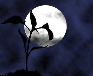 Лунный огород
