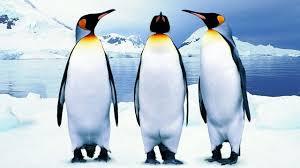 Гигантские пингвины