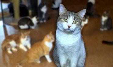 «Четыре Лапы» и Purinа запускают акцию помощи животным из приютов «Добролап»