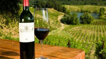 Сочные, фруктовые красные вина