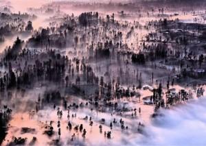 Misty At Cemoro Lawang